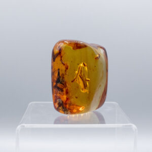 amber twig fossil