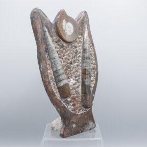 standing slab fossils