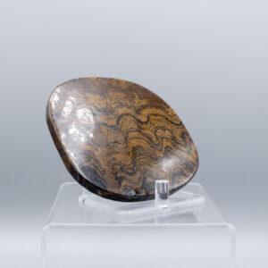 stromalite slab fossils
